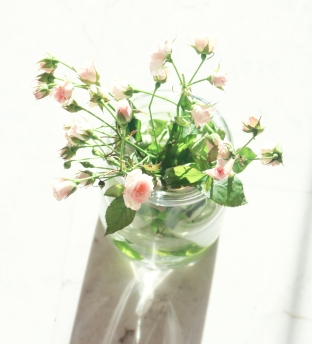 roses (1 de 1)